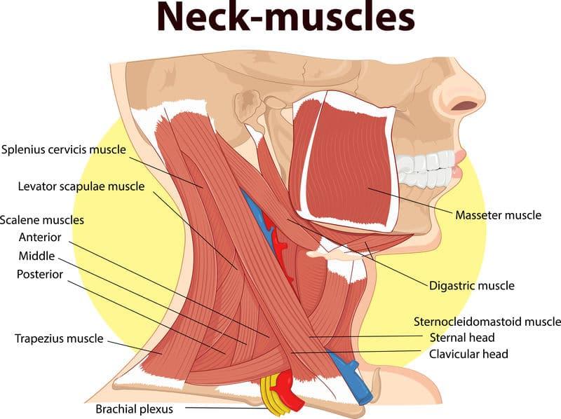 spieren in de nek en hoofdsteun