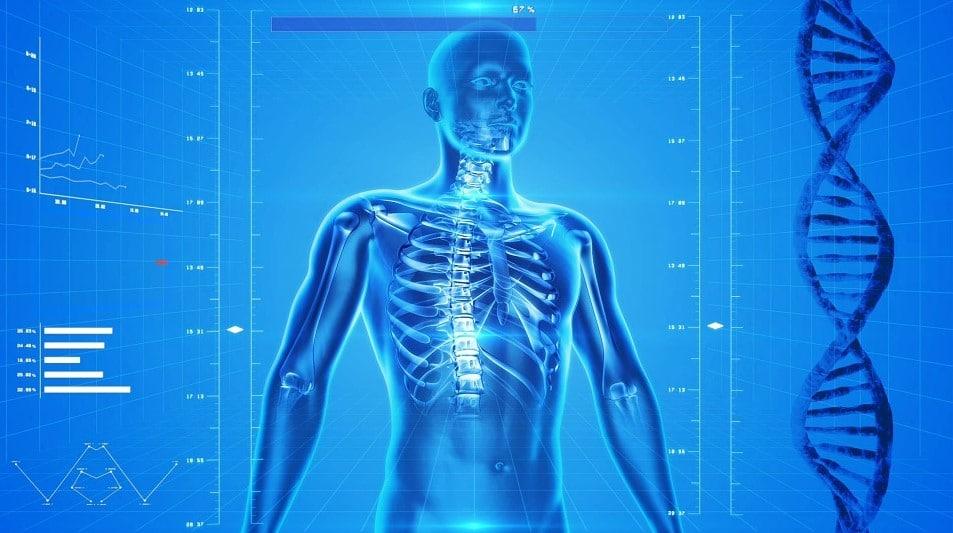 menselijk scelet met ruggenwervel